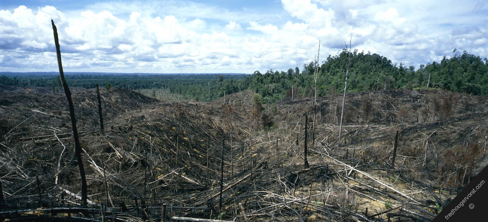 DEFORESTATION - People of the Rainforest